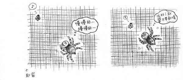 廚房裡的蠅虎