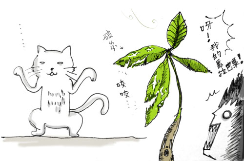 家貓的創作