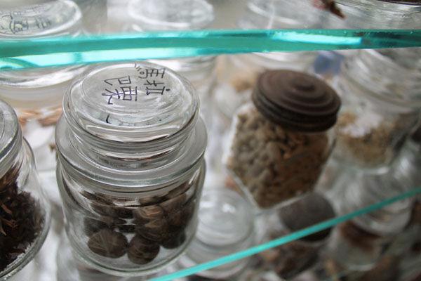馬拉巴栗種子