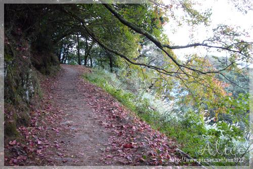 襯著紅葉的步道