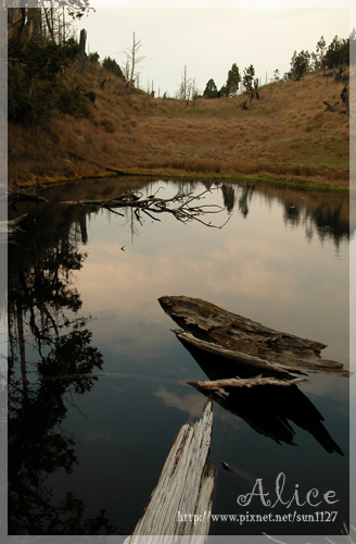 偉蛋池枯木映池
