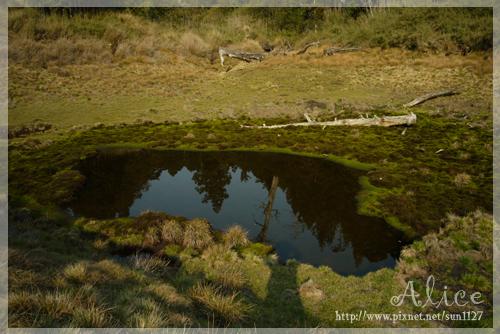 另一小池--池的倒影...眼見的最美!