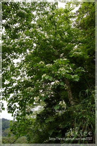 看到翠綠的葉,雪白的花,心情都好了起來!