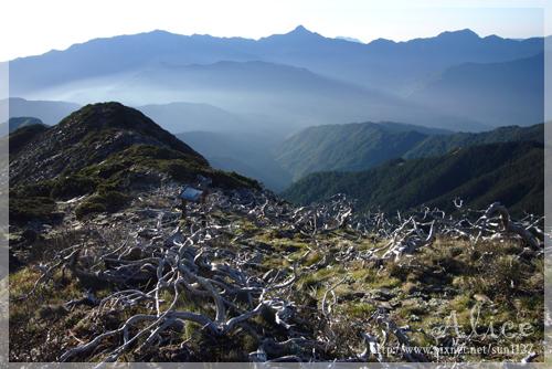 披上薄霧的山巒映著玉山圓柏