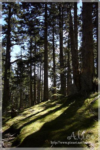 漫步黑森林