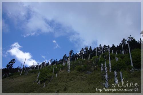 白木林+翠綠的巒大花秋