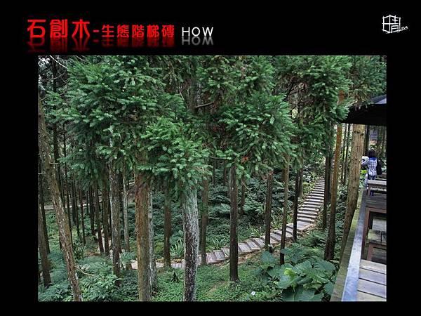 生態階梯磚-07.JPG