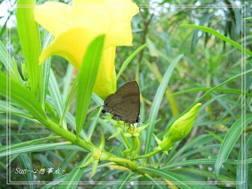 20130505109小灰蝶