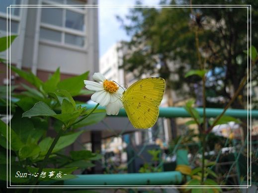 2013062112黃蝶