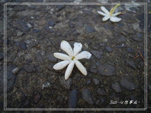 2013070115毛茉莉