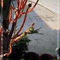2014010131袖珍椰子.jpg