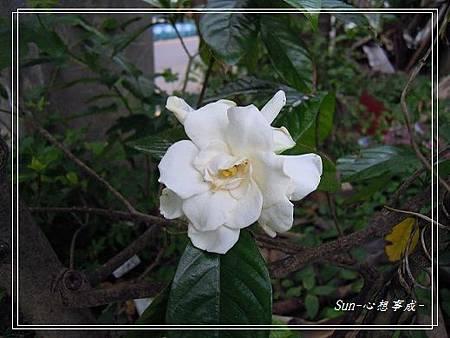20140503036黃梔子.jpg