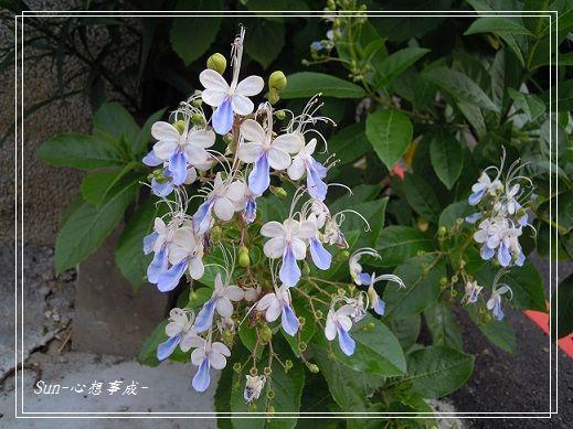 20140621001花蝴蝶.jpg