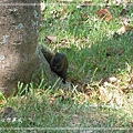 20140908017赤腹松鼠.jpg