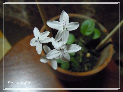 20140916001多變擬美花.jpg