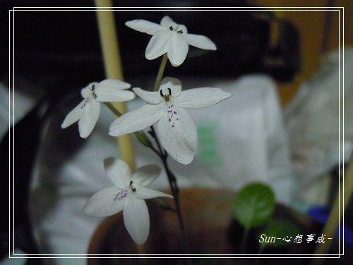 20140916003多變擬美花.jpg