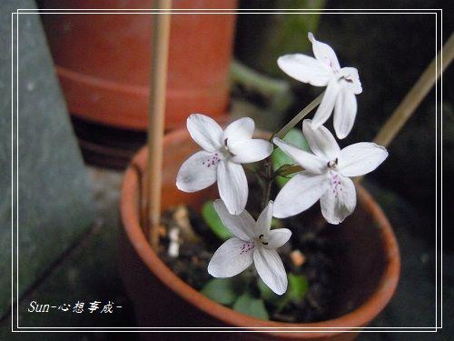 20140916013多變擬美花.jpg