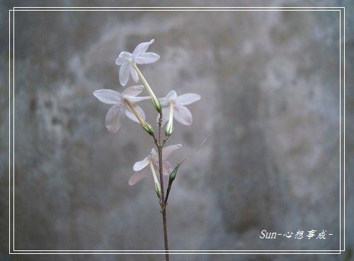 20140916016多變擬美花.jpg