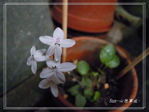 20140916011多變擬美花.jpg