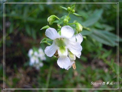 20141122048天使花.jpg
