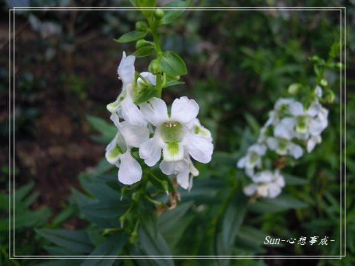 20141122045天使花.jpg