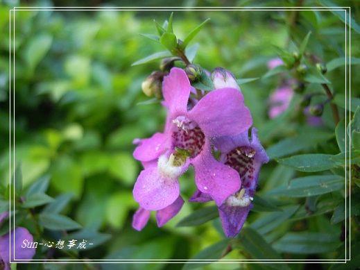 20141122061天使花.jpg