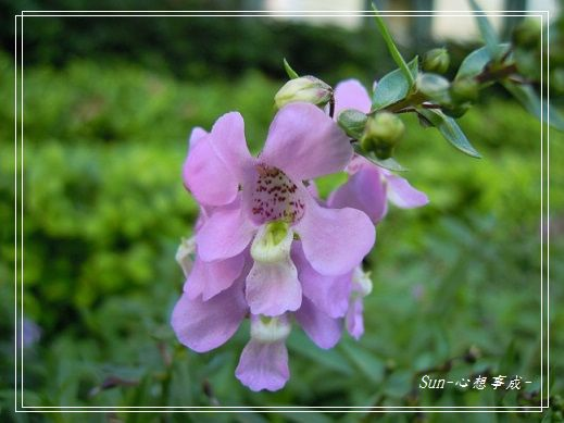 20141122056天使花.jpg
