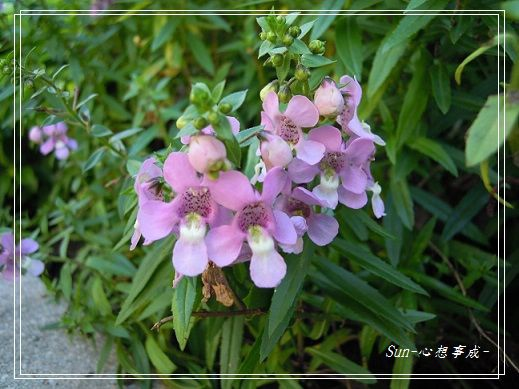 20141122059天使花.jpg