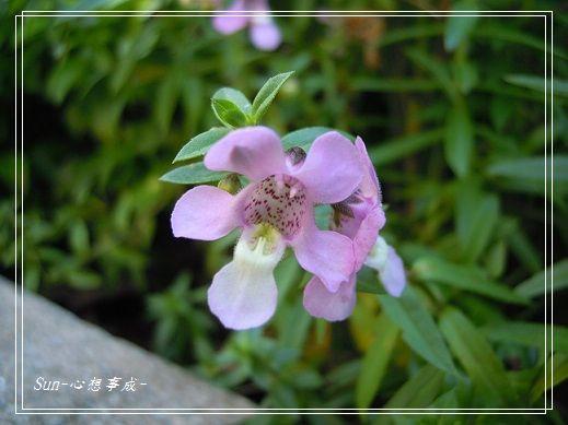 20141122060天使花.jpg