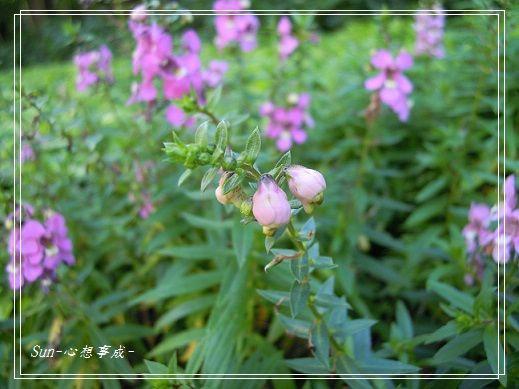 20141122058天使花.jpg