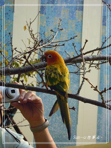 20150104008鸚鵡.jpg