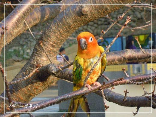 20150104013鸚鵡.jpg