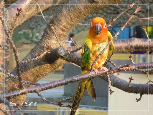 20150104015鸚鵡.jpg