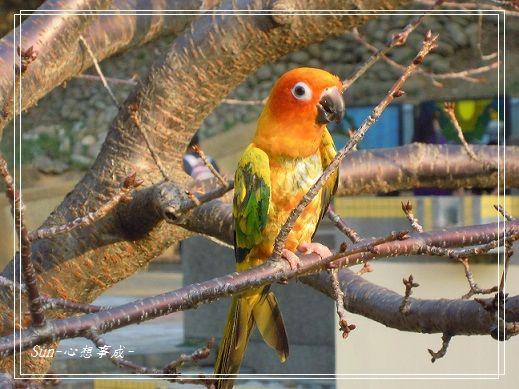 20150104014鸚鵡.jpg