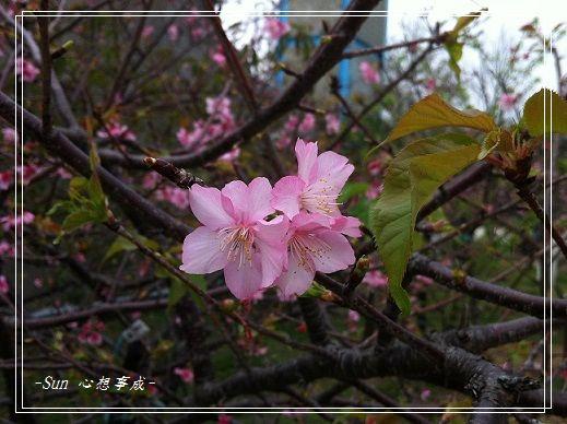 IMG_5790.jpg