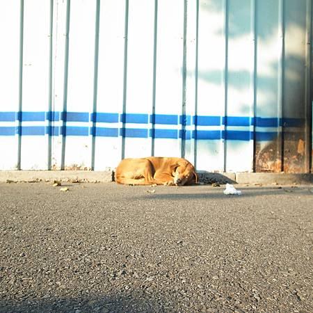 20140112冬の暖かい太陽の下に眠っているは気持ちがいいと思っています