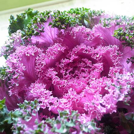 20140120きのう、花市場で盆栽をかいました
