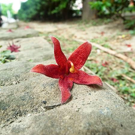 20140422こんなの花はきれいなのに、臭いが悪いです。