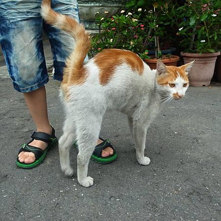 20140426この猫は人と遊ぶのが好きそうです。