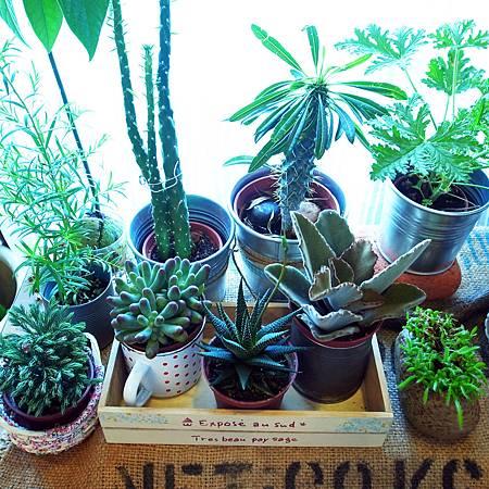 20140505元気そうな植物たちです。