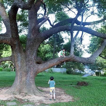 20140628私もこの木に登るしたかったです。