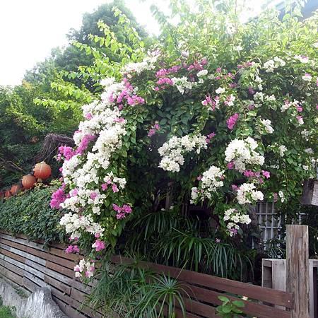 20140718天気が暑いのに、花がまだ咲いていた。-1