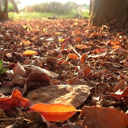 20140719すぐに秋が来ると思いました。