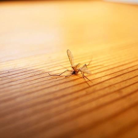 20141128蚊は私の手に死にました。