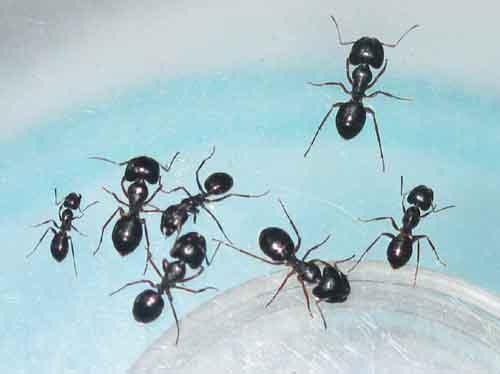 螞蟻哲學:簡單但非常有效的觀念!