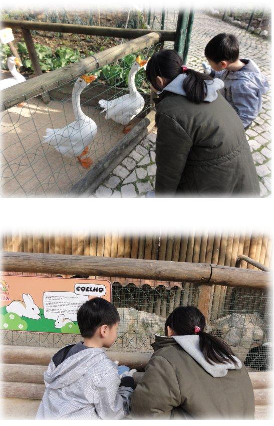136-ZOO可愛動物區.jpg