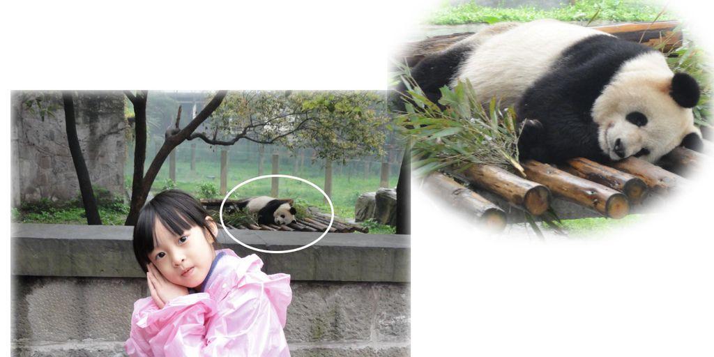 18-微雨重慶動物園.JPG