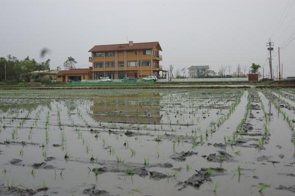 2008春 插秧