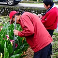 【宜蘭旅遊景點推薦】2013 三星彩色海芋田 【宜蘭民宿】Sunday Home