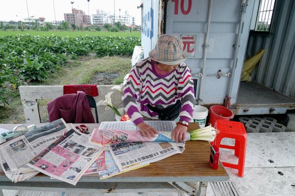 【宜蘭旅遊景點】五結海芋田 -- 【宜蘭民宿】Sunday Home